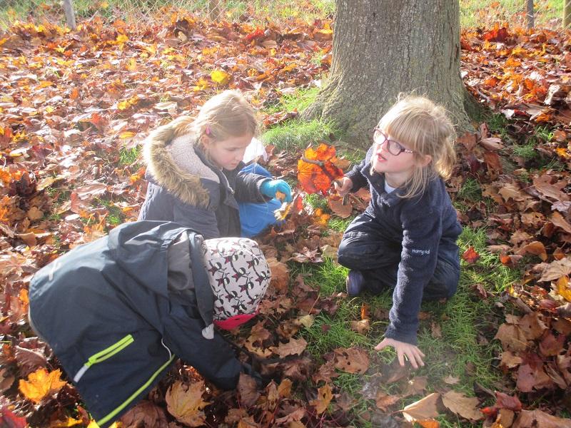 KS1 Forest School